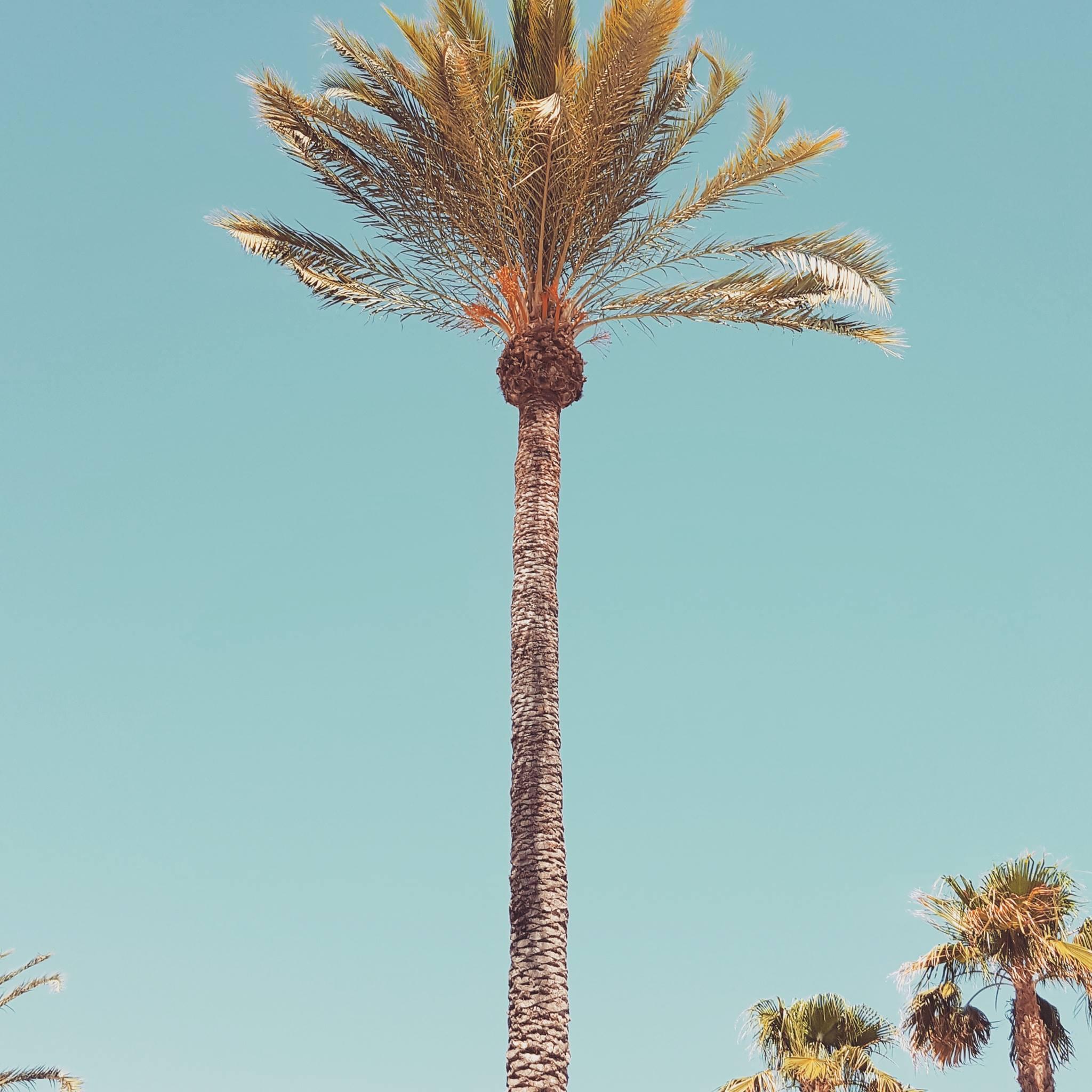 Palms Ibiza